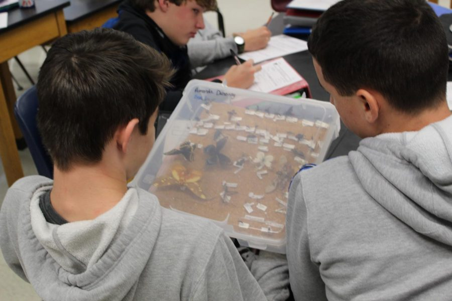 The students in Ms. Campbell's class learned about bugs and how they are preserved.
